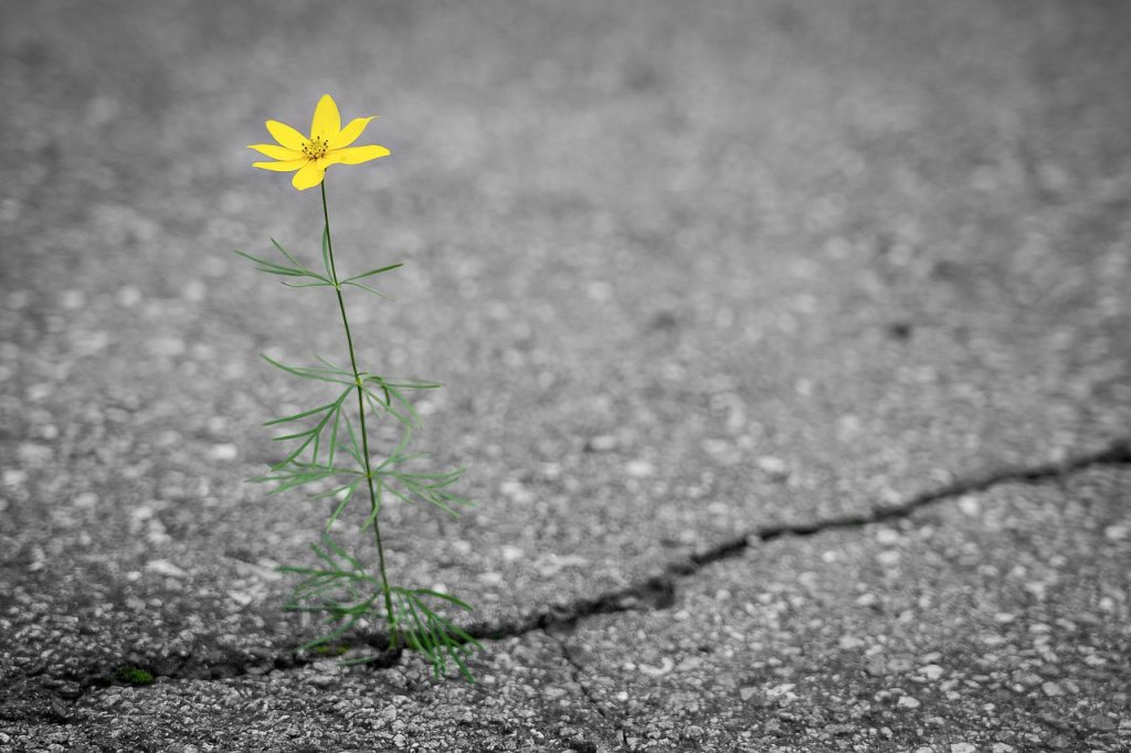 flower, road, crack
